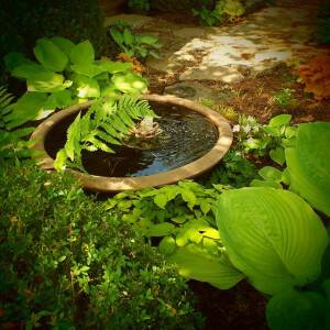 Glenda Zahner talks about Attracting Birds and Butterflies to the Garden