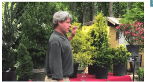 Horticulture Videos: All About Evergreens