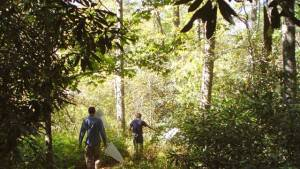 How to Support Sustainable Gardening? Join Forces with the Highlands Biological Station