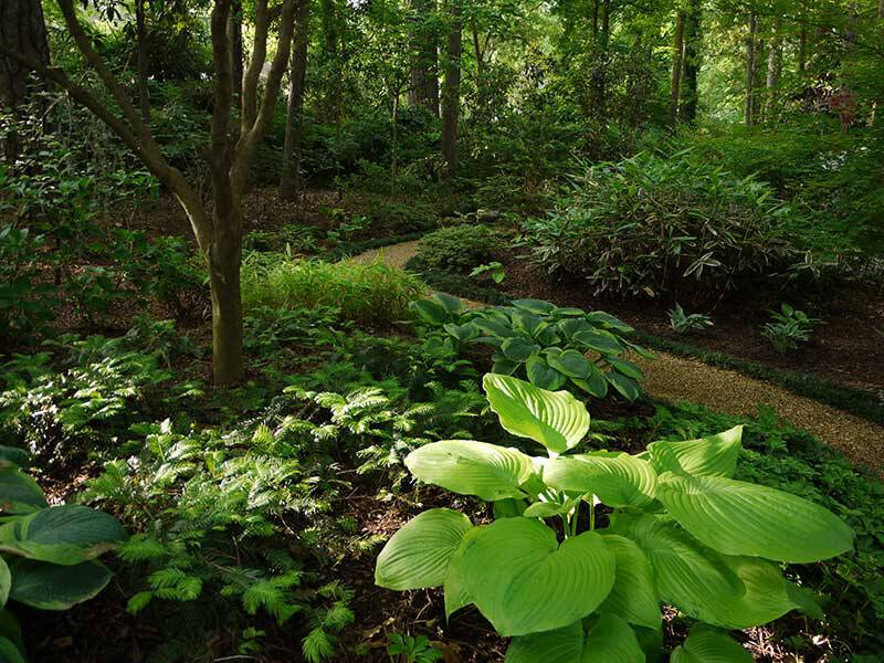 Falcone Woodland