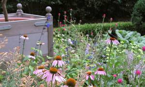 Why Create a Pollinator Garden in YOUR Home Environment ?