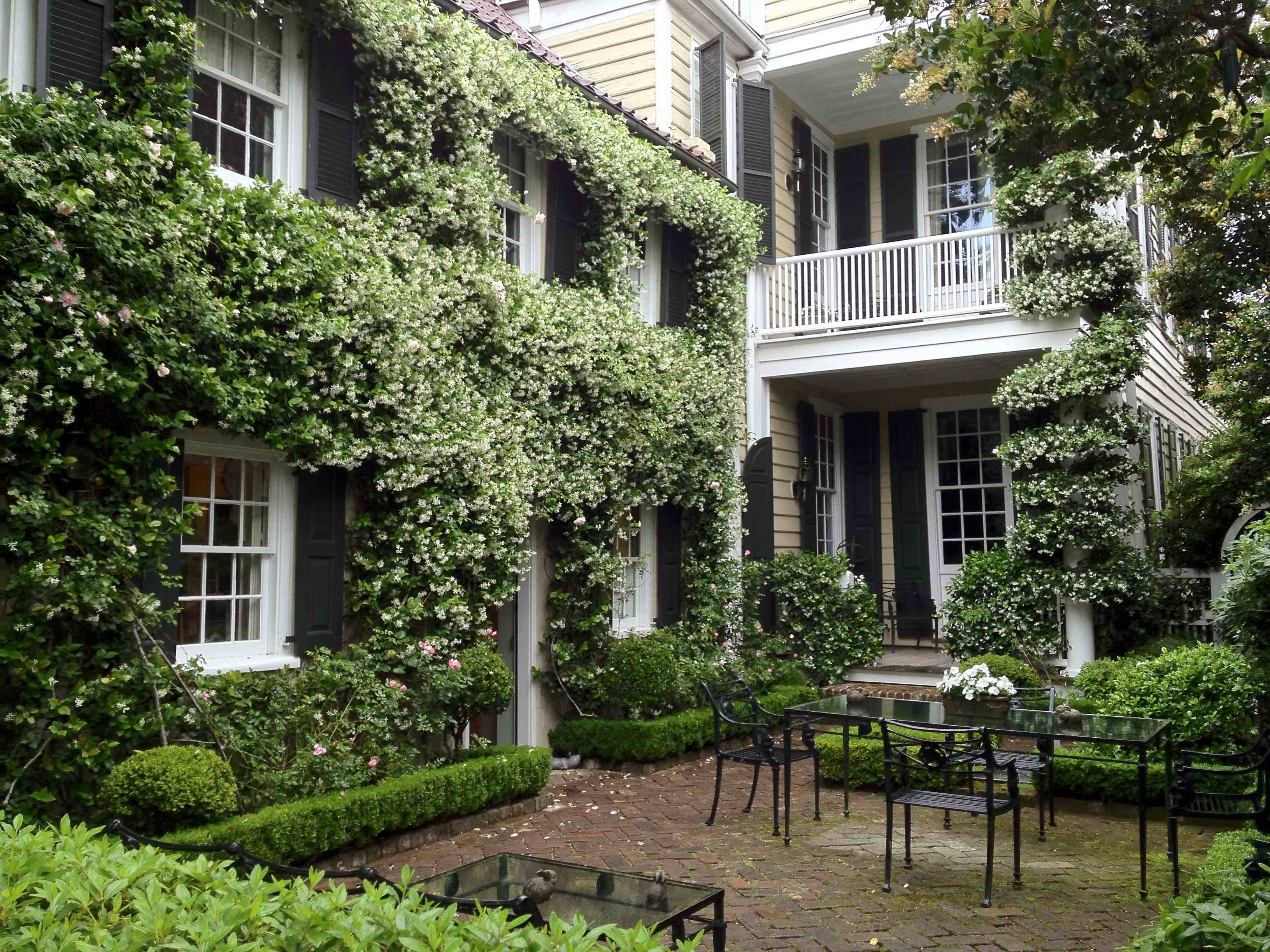 Classic Charleston With Garden Confederate Jasmine In