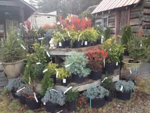 Thursdays at 10 in Dovecote's Garden:  Mountain Hedges