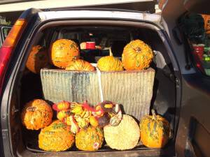 MP - Fall Festival - Pumpkins