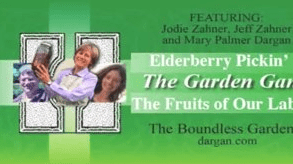 What are the Health Benefits of Elderberries? Learn About Elderberries with Mary Palmer Dargan
