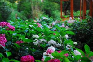Tranquil Garden Events Happening in April 2015